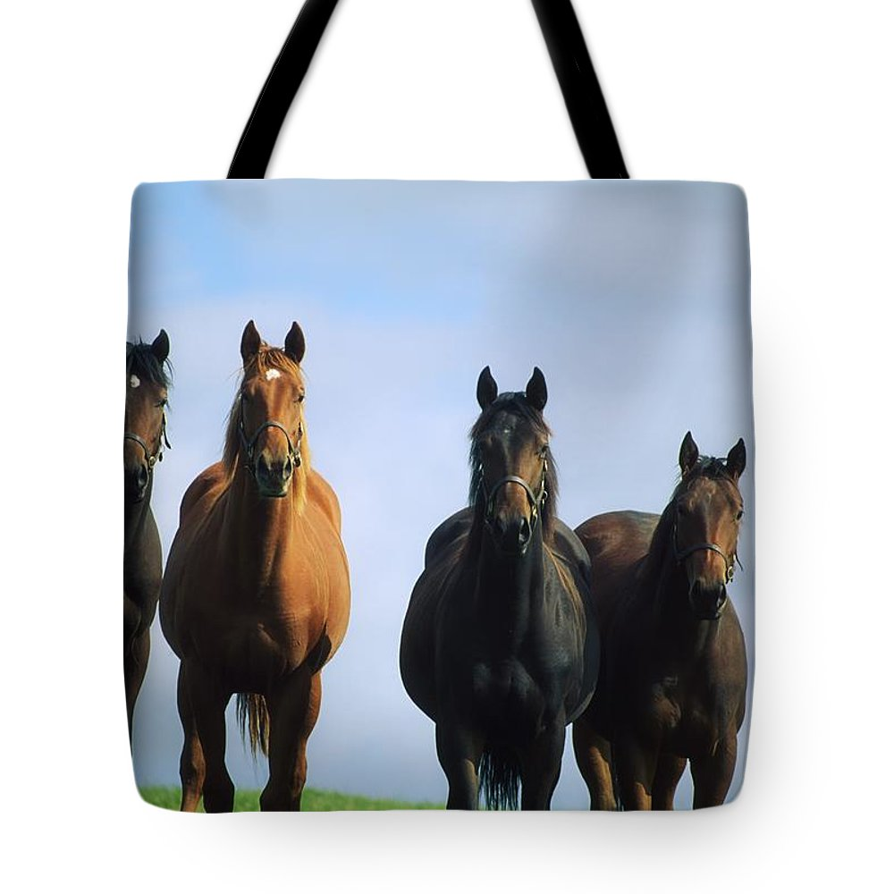 Blue Sky Tote Bag featuring the photograph Ireland Thoroughbred Yearlings by The Irish Image Collection