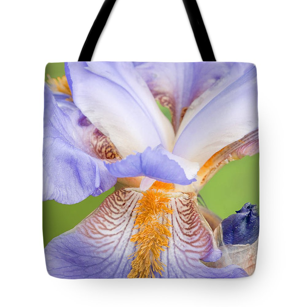 Iris Tote Bag featuring the photograph Iris Full Bloom by Regina Geoghan