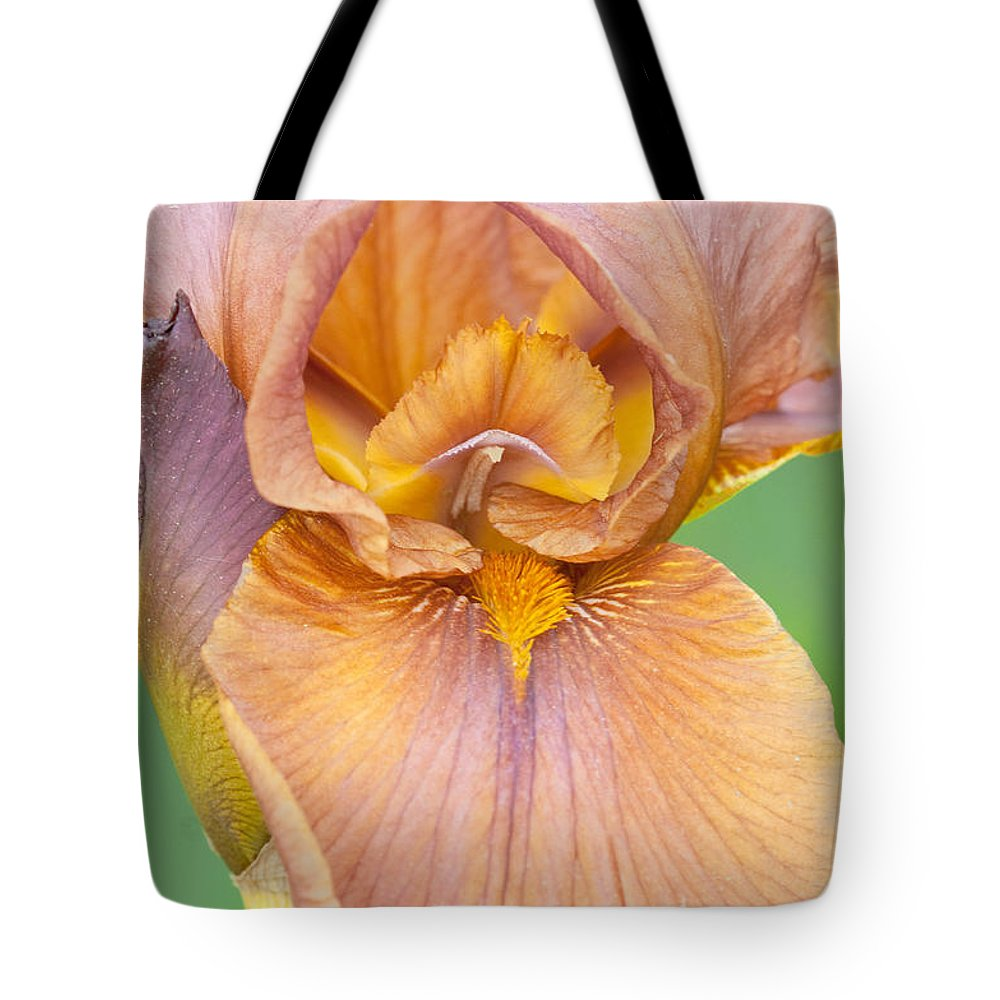 Iris Tote Bag featuring the photograph Iris In Gold by Regina Geoghan