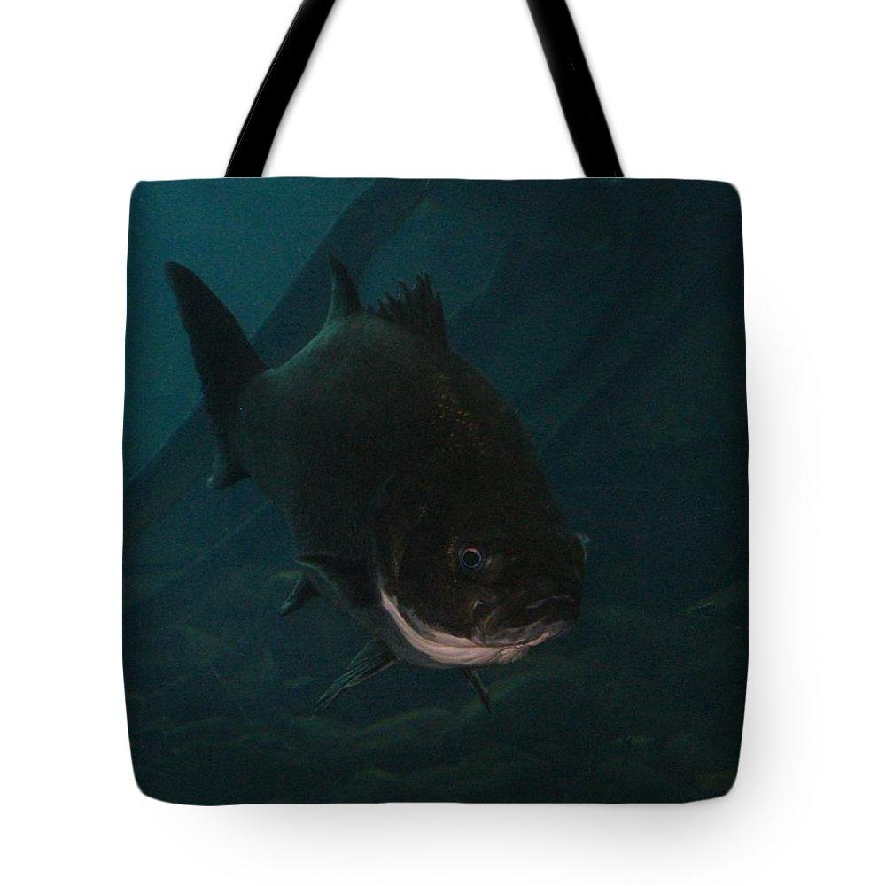 Florida Tote Bag featuring the photograph Islamorada Lurker by Lin Grosvenor