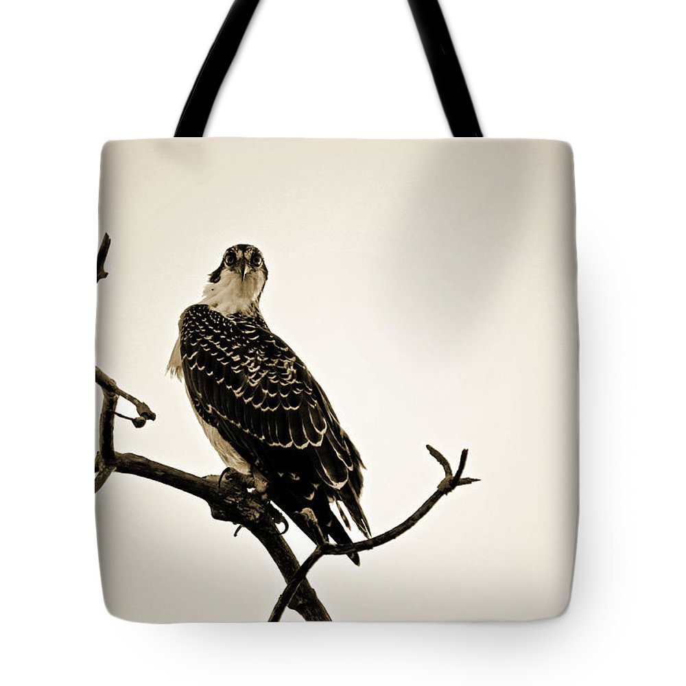 Osprey Tote Bag featuring the photograph iSpy Osprey by Christine Stonebridge