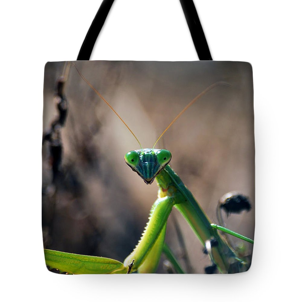 Praying Mantis Tote Bag featuring the photograph It's Time To Pray by Lori Tambakis