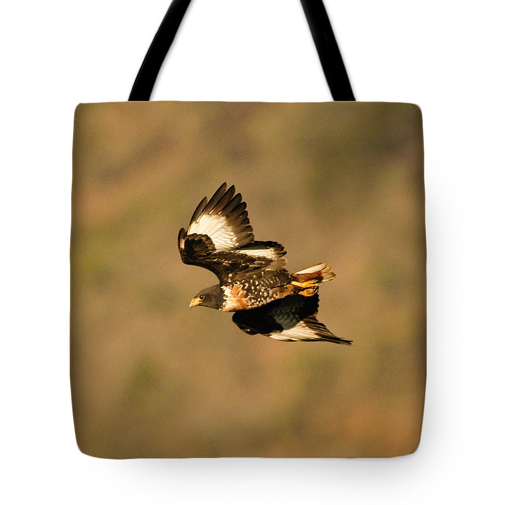 Action Tote Bag featuring the photograph Jackal Buzzard Flight by Alistair Lyne