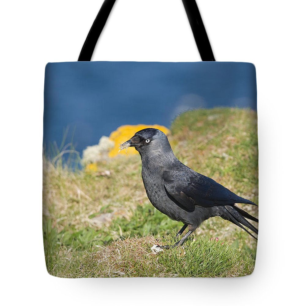 Jackdaw Tote Bag featuring the photograph Jackdaw Gathering Nesting Materials by Howard Kennedy