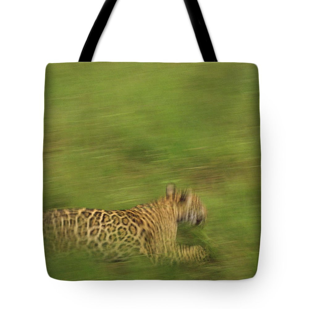 Mp Tote Bag featuring the photograph Jaguar Panthera Onca Running by Claus Meyer