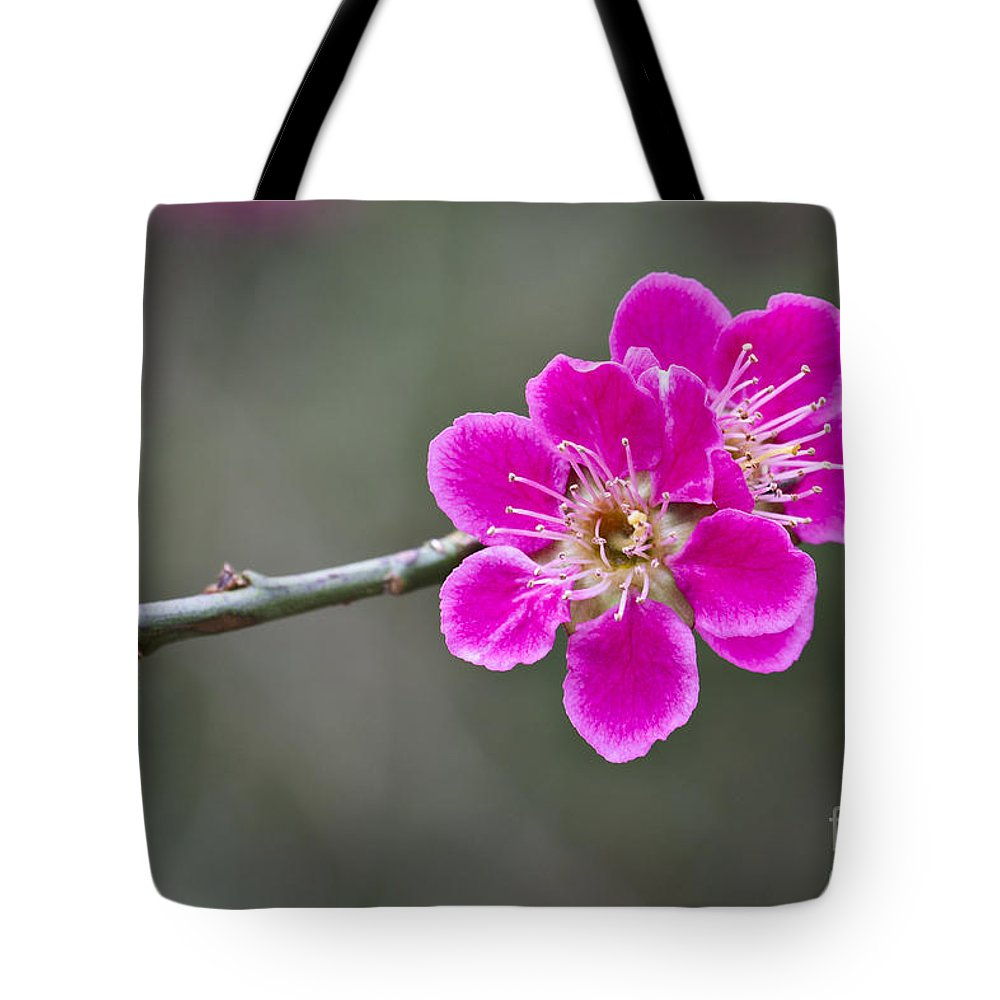 April Tote Bag featuring the photograph Japanese Flowering Apricot. by Clare Bambers