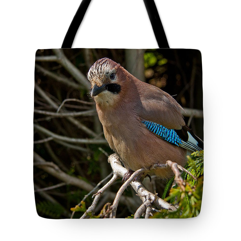 Eurasian Jay Tote Bag featuring the photograph Jay by Dawn OConnor
