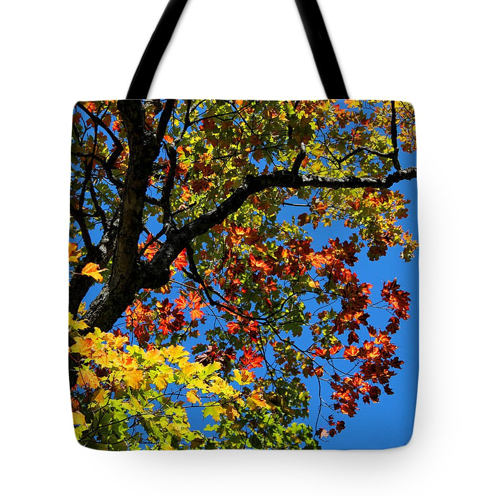 Jewels Of Autumn Tote Bag featuring the photograph Jewels Of Autumn by Rachel Cohen