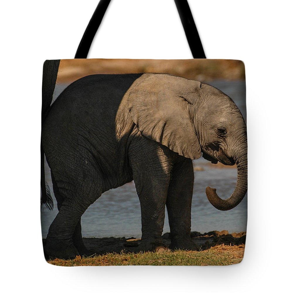 Focussed Tote Bag featuring the photograph Junior by Alistair Lyne