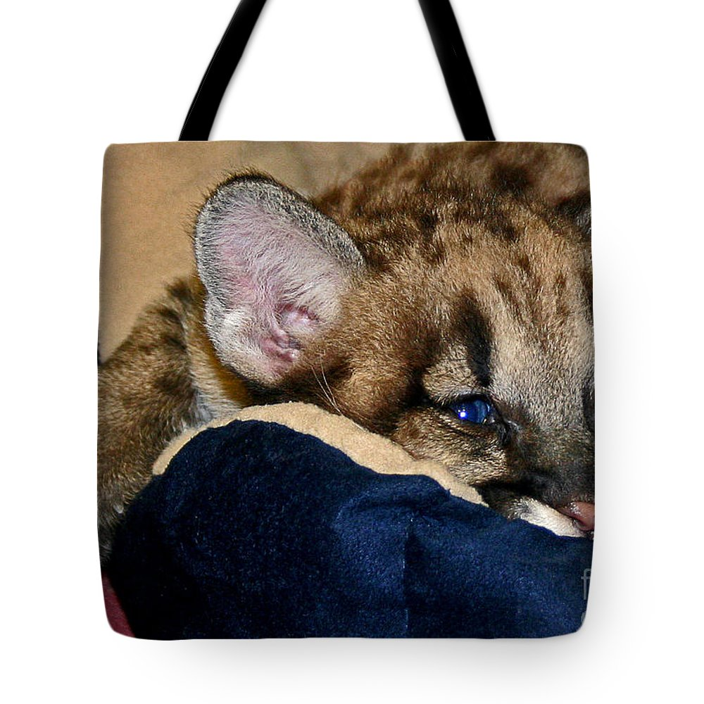 Cougar Tote Bag featuring the photograph Just A Big Kitten by Rebecca Morgan