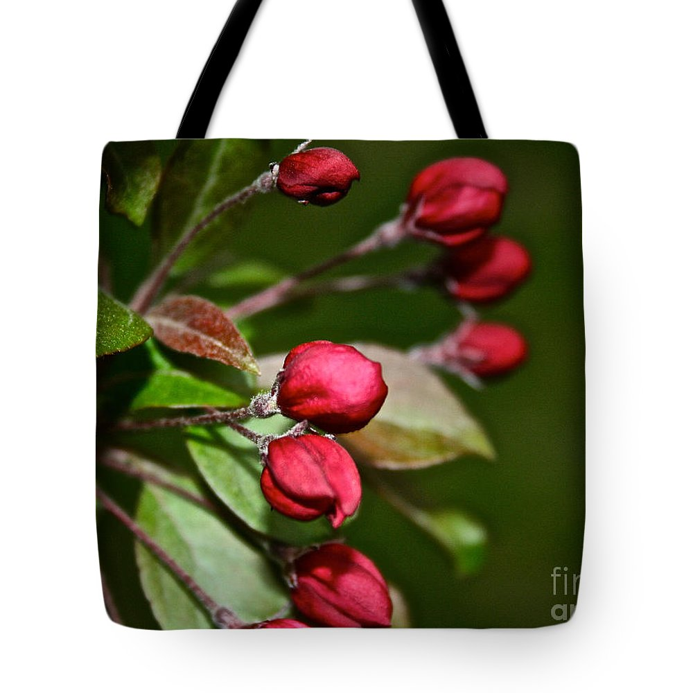 Plant Tote Bag featuring the photograph Just Add Sun by Susan Herber