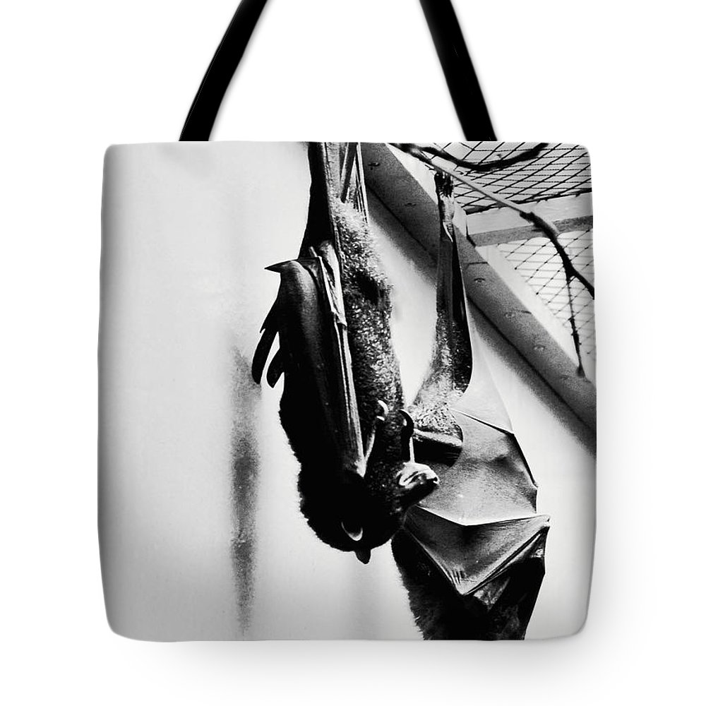 Bat Tote Bag featuring the photograph Just Hanging Around by Brittany Horton