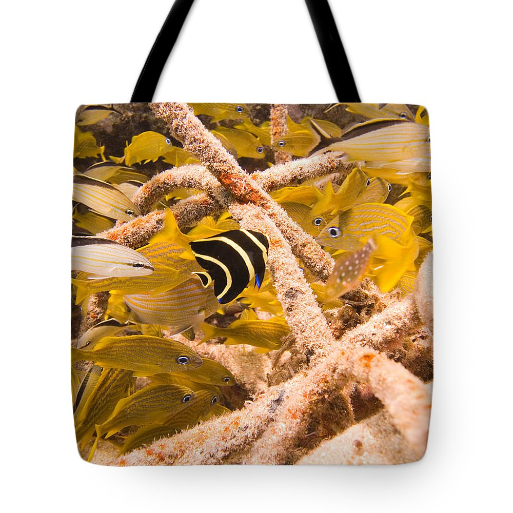 Mexico Tote Bag featuring the photograph Juvenile French Angelfish Among French by Michael S. Lewis