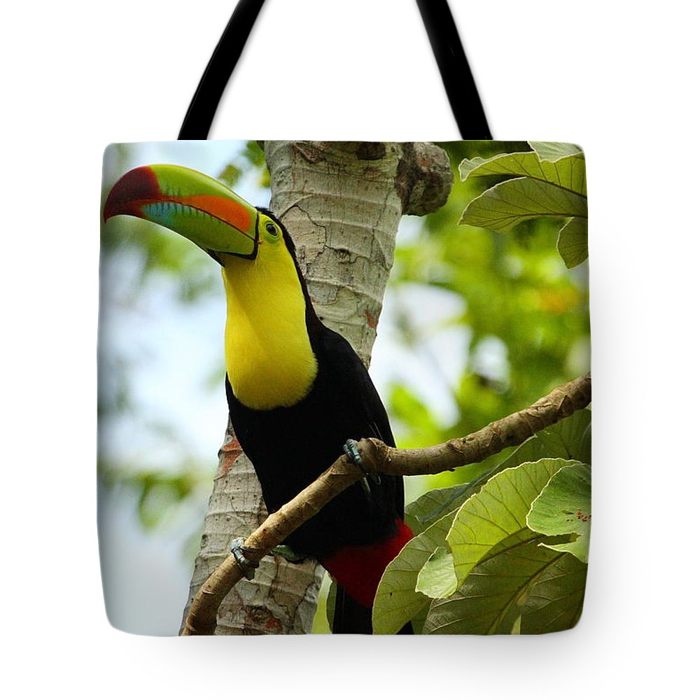 Keel-billed Toucan Tote Bag featuring the photograph Keel-billed Toucan by Andrew McInnes