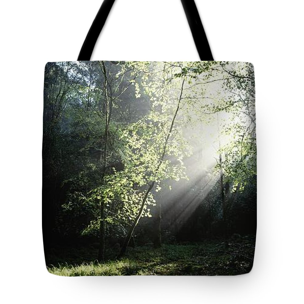 Co Kerry Tote Bag featuring the photograph Killarney National Park, Co Kerry by The Irish Image Collection