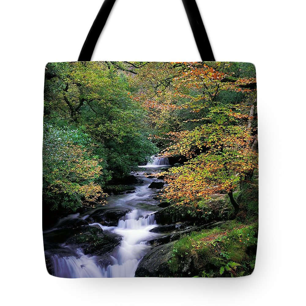 Autumn Leaves Tote Bag featuring the photograph Killarney National Park, Ring Of Kerry by The Irish Image Collection