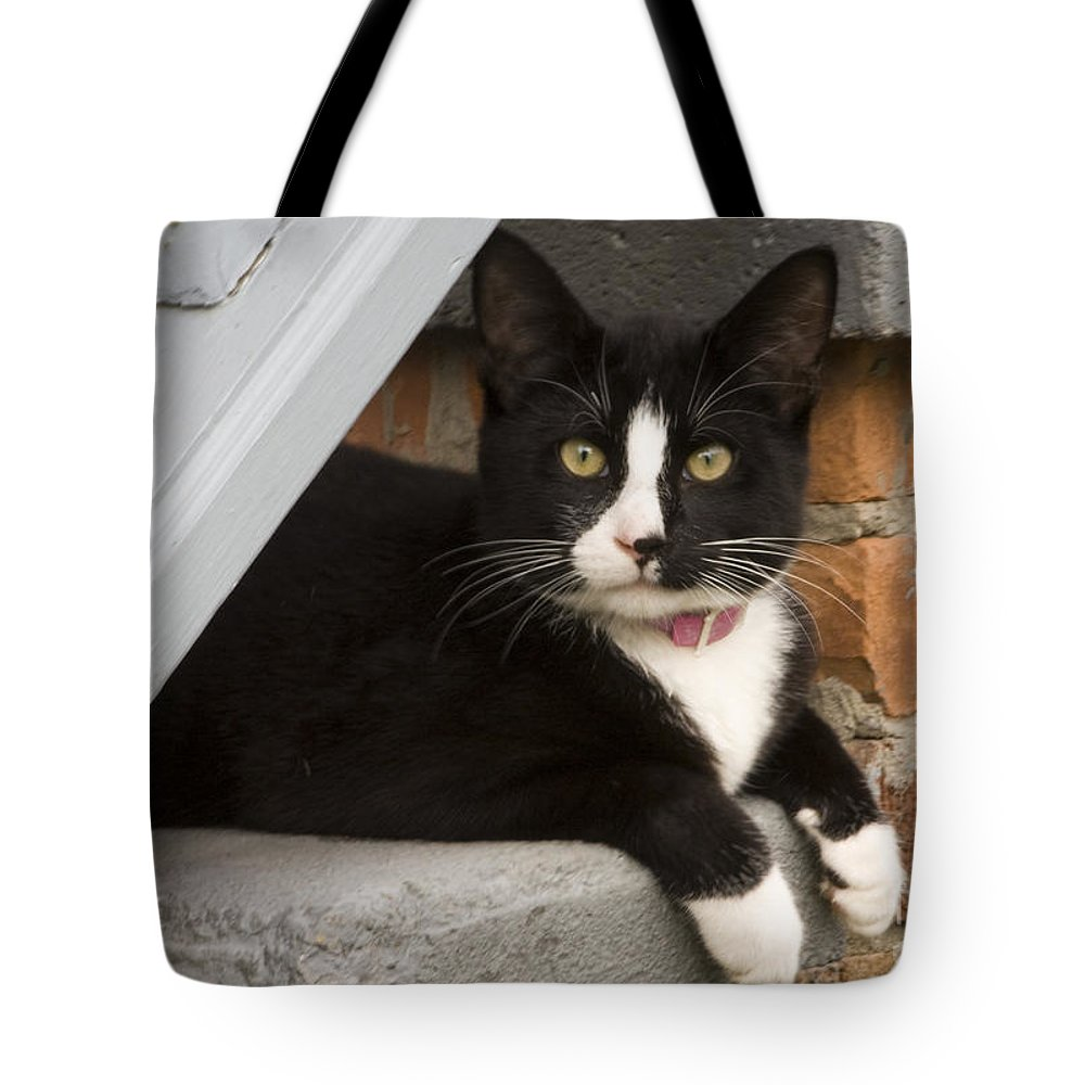 Kitty Tote Bag featuring the photograph Kitty by Darleen Stry