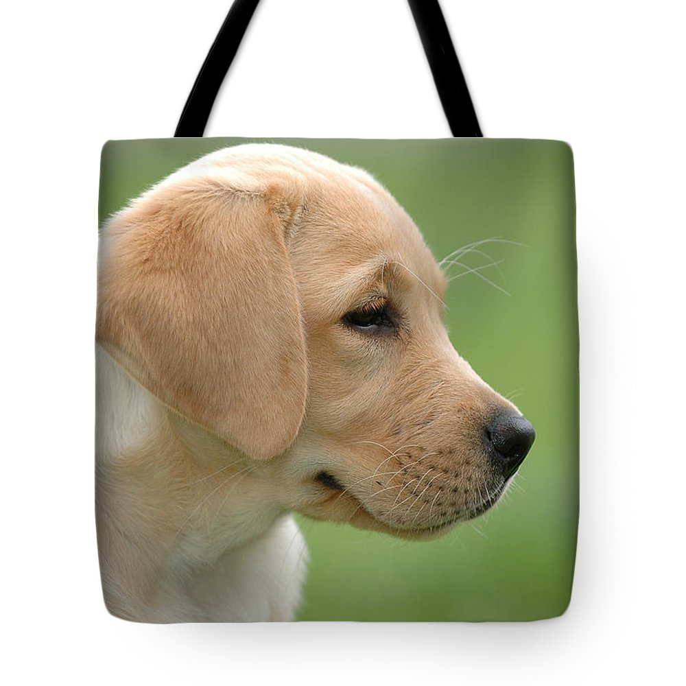 Animal Tote Bag featuring the photograph Lab by Waldek Dabrowski