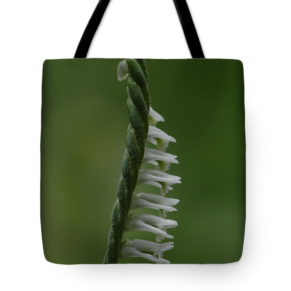 Northern Slender Ladies'-tresses Tote Bag featuring the photograph Ladies' Tresses Orchid by Daniel Reed