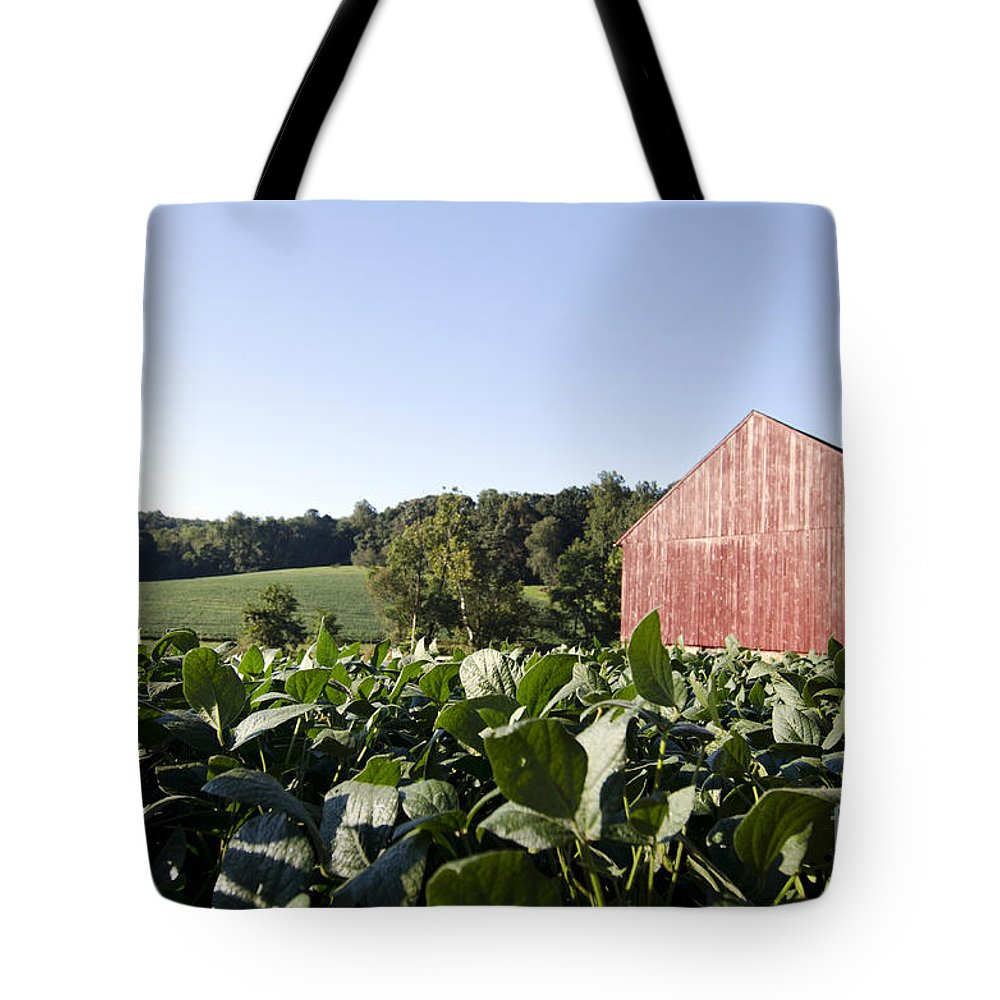 Barn Tote Bag featuring the photograph Landscape Soybean Field In Morning Sun by Terri Winkler