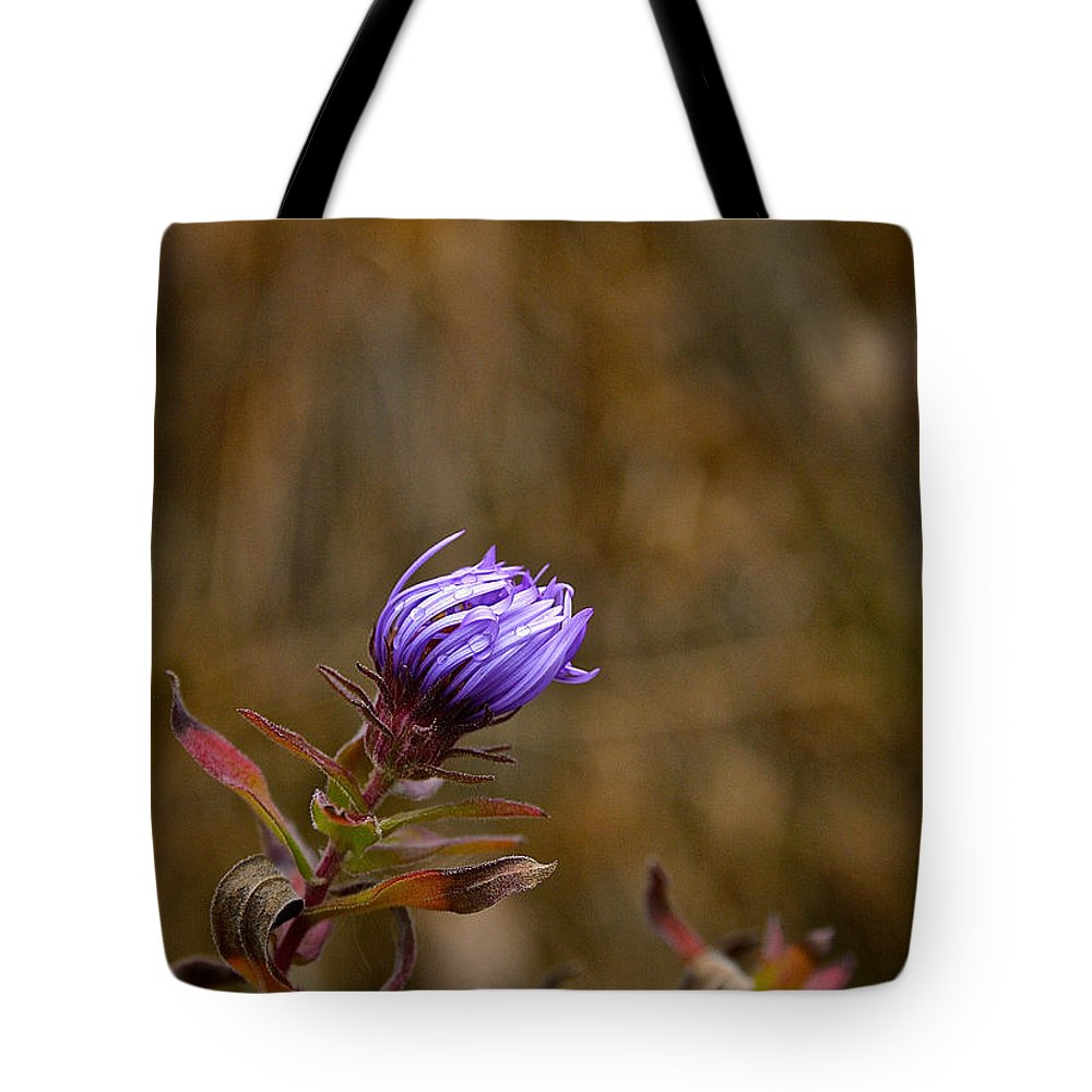 Tote Bag featuring the photograph Last Aster by Susan Herber