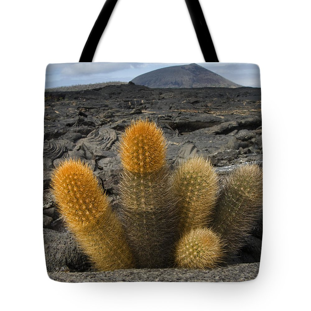Mp Tote Bag featuring the photograph Lava Cactus Brachycereus Nesioticus by Pete Oxford