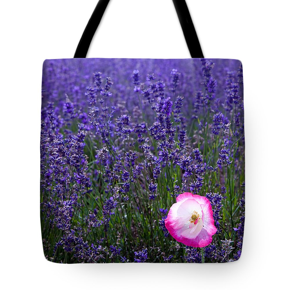 Abundance Tote Bag featuring the photograph Lavender Field With Poppy by Simon Bratt Photography LRPS