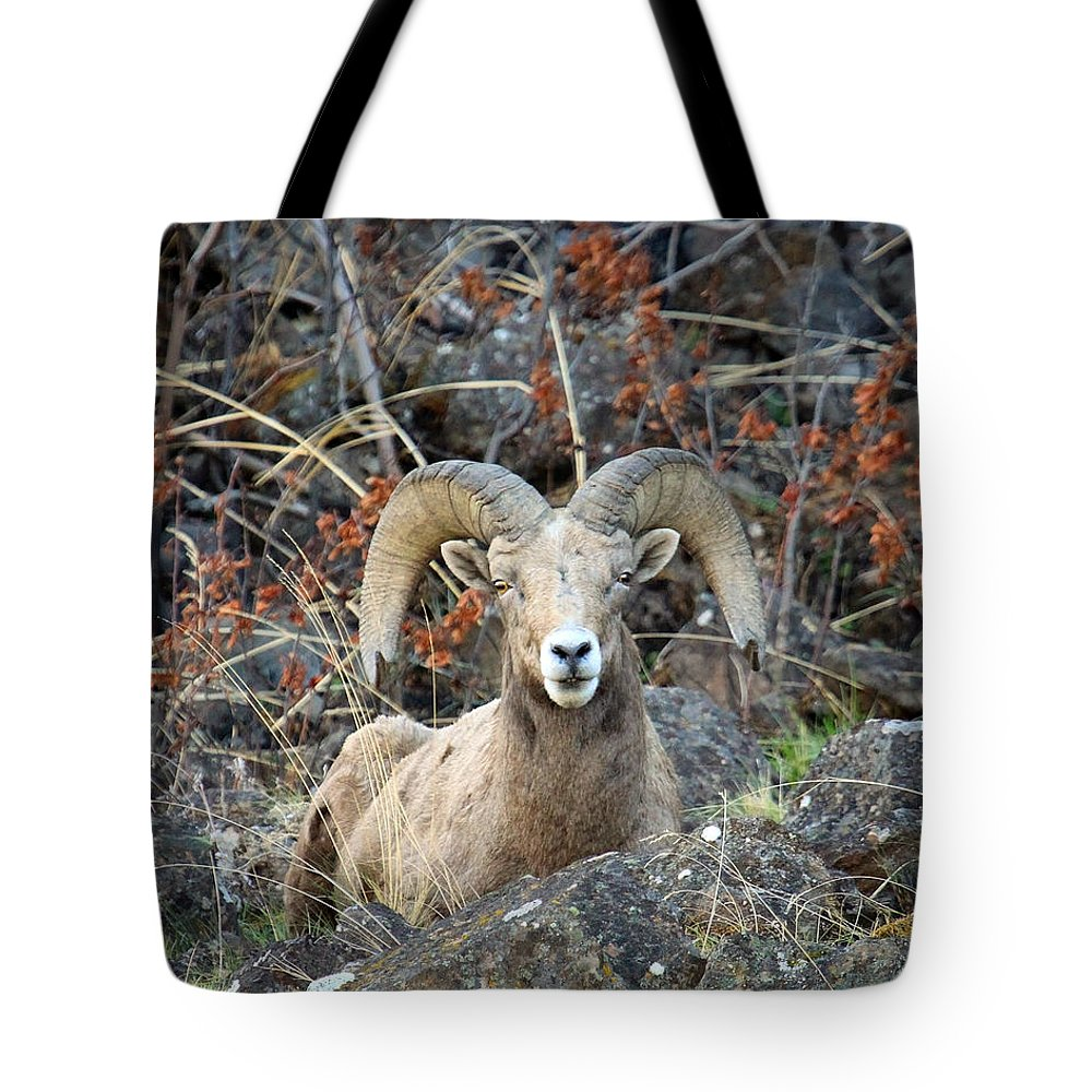 Bighorn Sheep Tote Bag featuring the photograph Laying In The Brush by Steve McKinzie