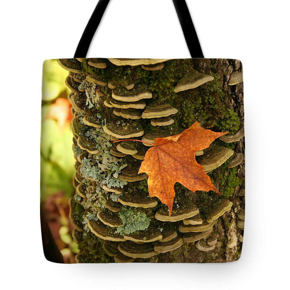Tote Bag featuring the photograph Leaf by Joi Electa