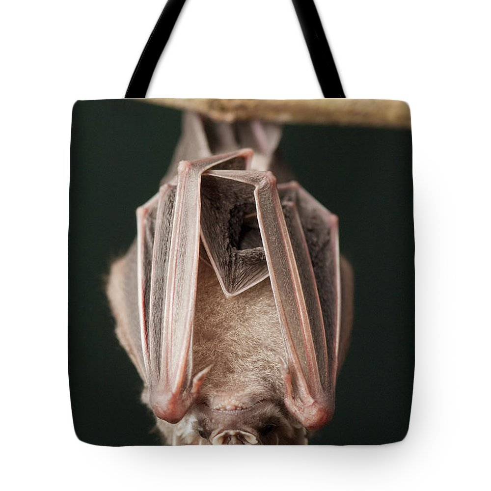Mp Tote Bag featuring the photograph Leaf-nosed Bat Phyllostomidae, Amazon by Murray Cooper