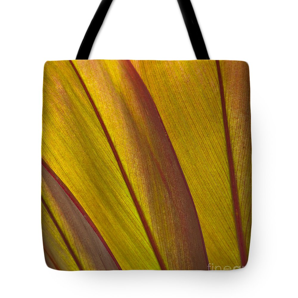 Bronstein Tote Bag featuring the photograph Leaf Patterns by Sandra Bronstein