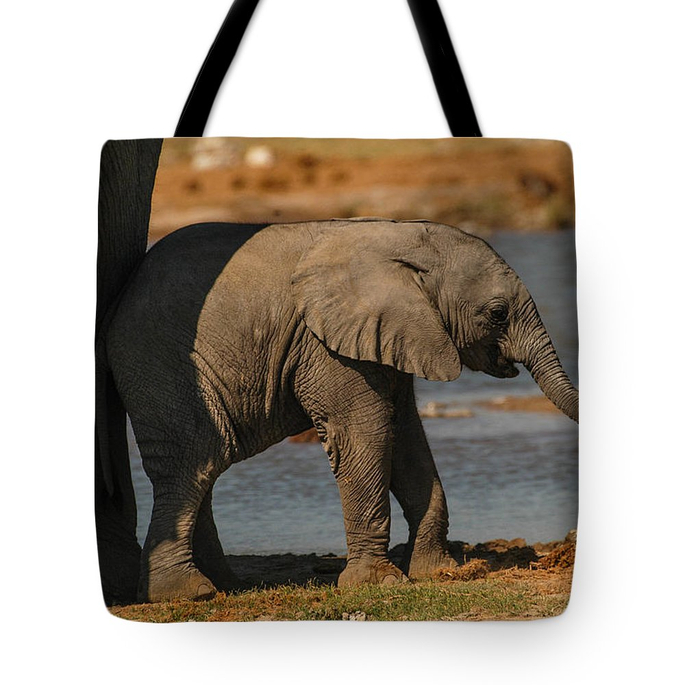 Focussed Tote Bag featuring the photograph Lean On Me by Alistair Lyne