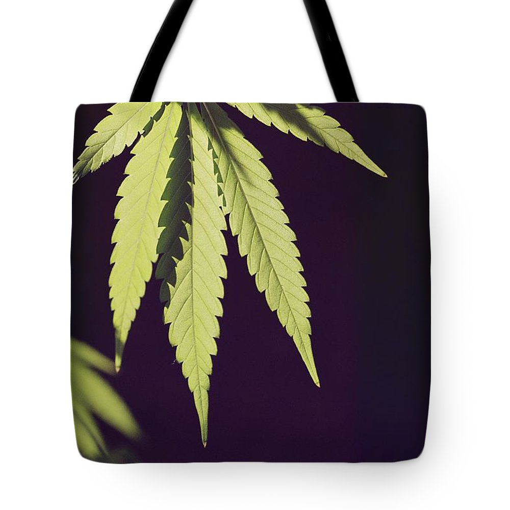 United States Tote Bag featuring the photograph Leaves Of A Marijuana Plant Cannabis by Todd Gipstein