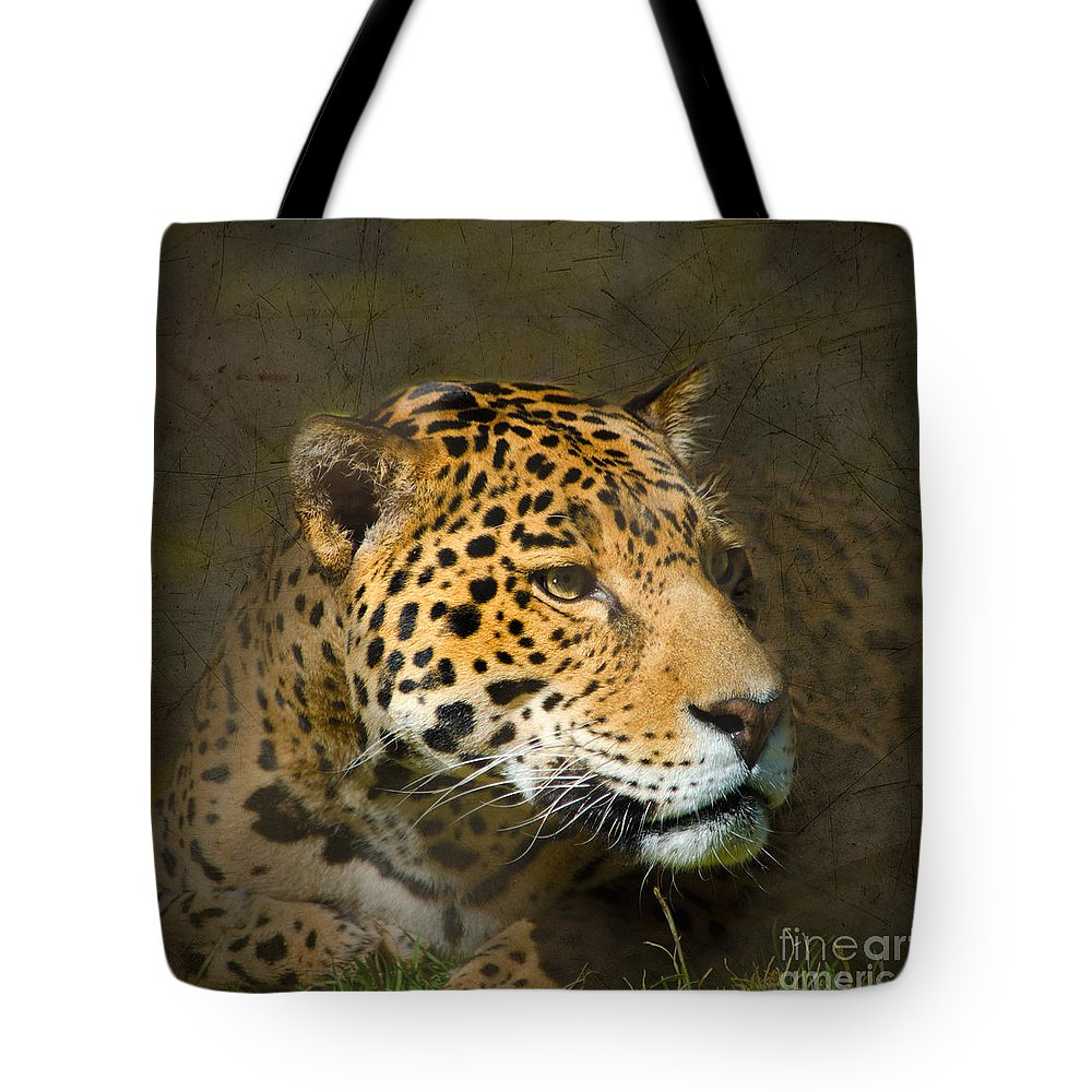 Leopard Tote Bag featuring the photograph Leopard by Betty LaRue