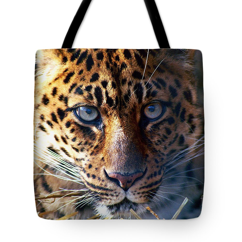 Leopard Tote Bag featuring the photograph Leopard by Ken Marsh