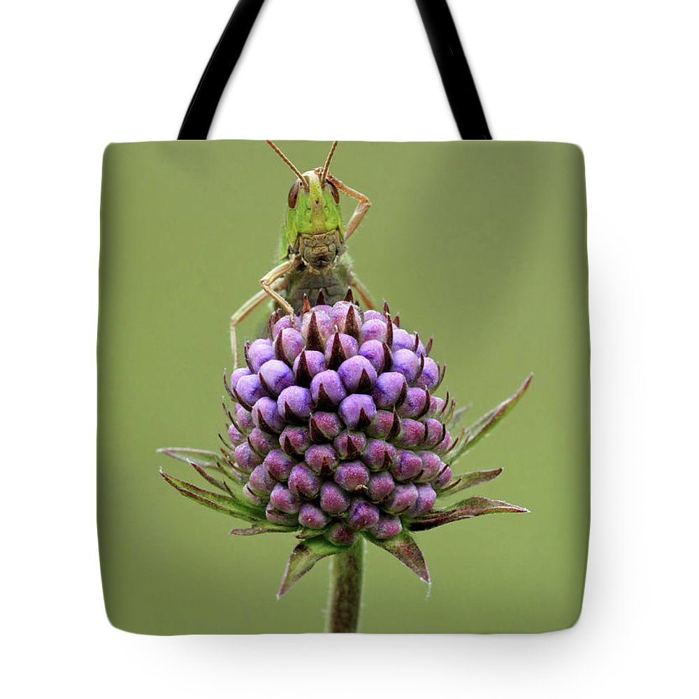 Animal Tote Bag featuring the photograph Lesser Marsh Grasshopper Chorthippus by Matthew Cole