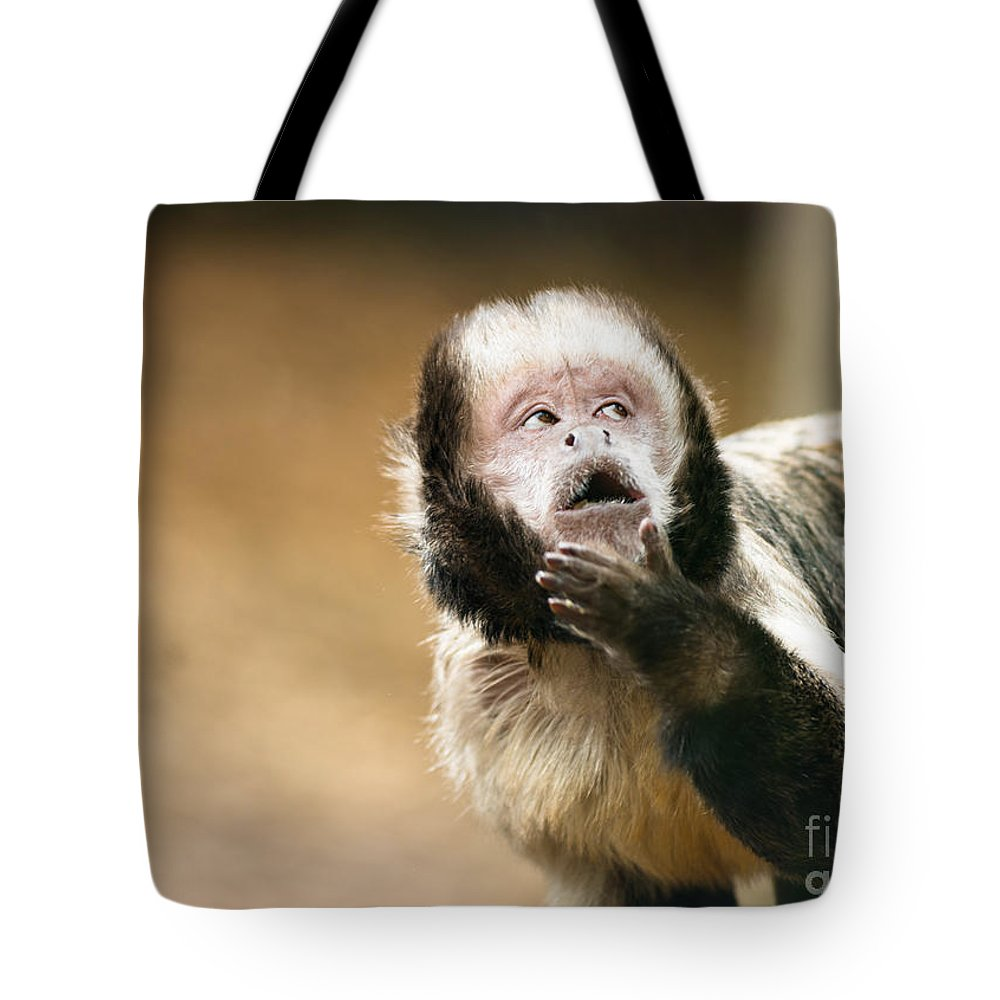Capuchin Tote Bag featuring the photograph Let Me Think About That by Andrew Michael