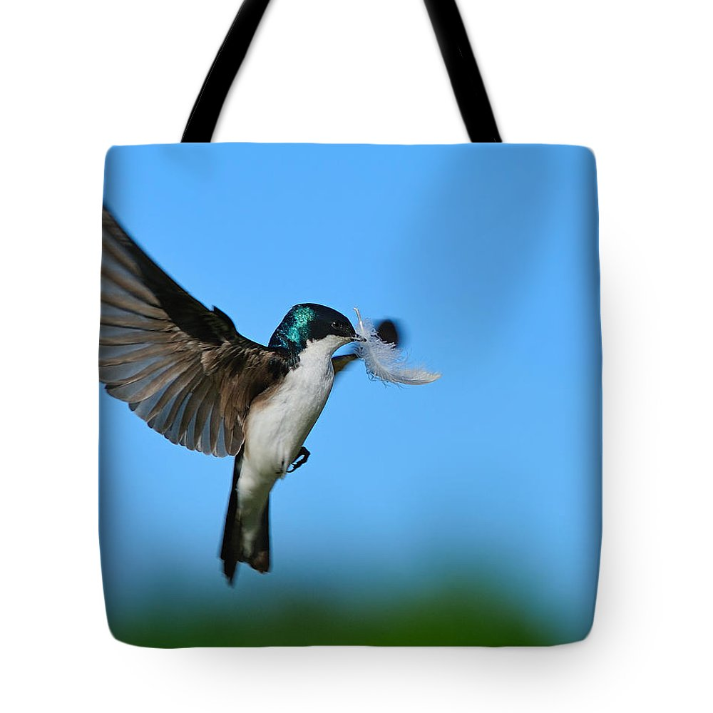 Tree Swallow Tote Bag featuring the photograph Light As A Feather by Tony Beck