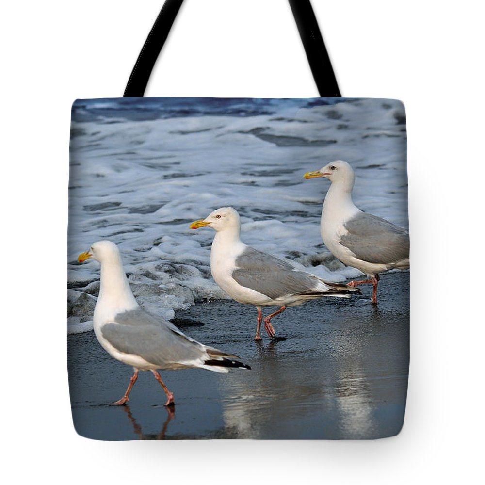 Seagulls Tote Bag featuring the photograph Lighthearted Seagulls by Debra Miller