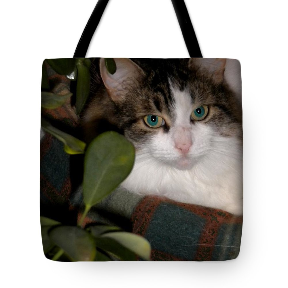 Cat Tote Bag featuring the photograph Lila's Nest by Renate Nadi Wesley