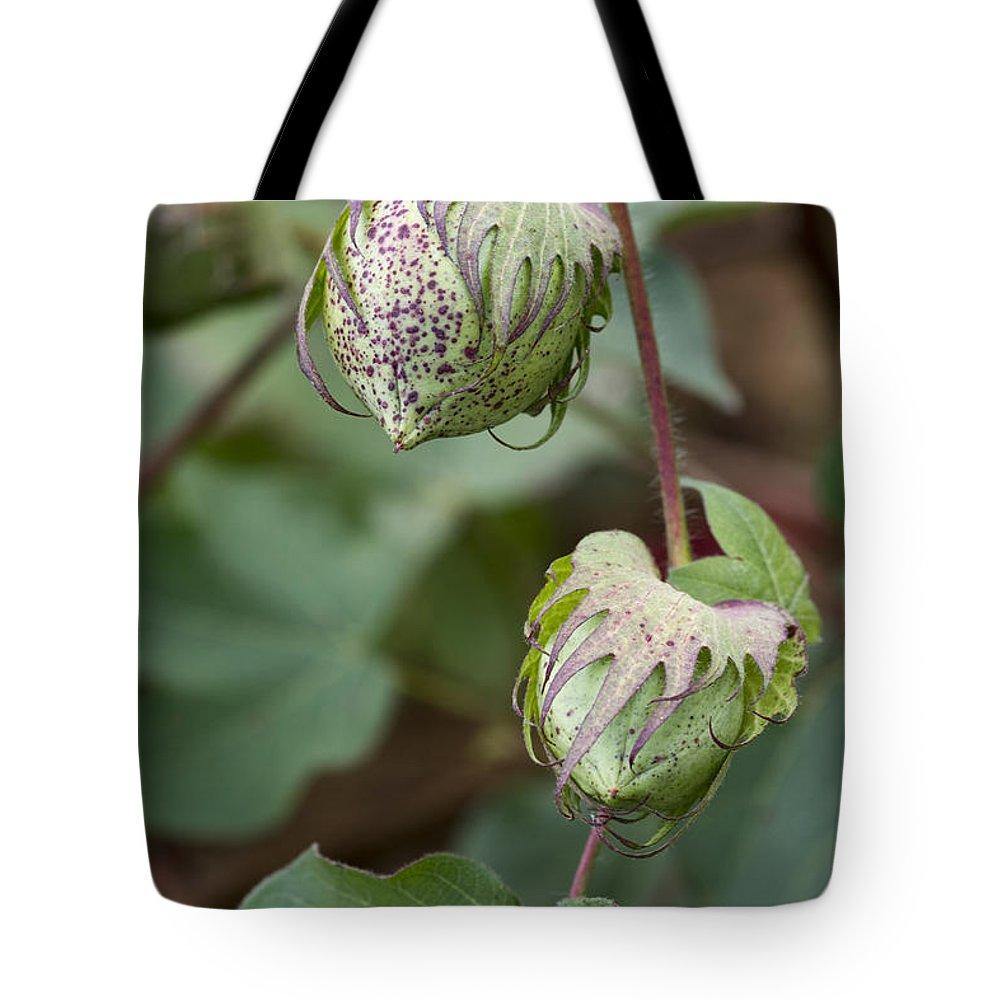 Cotton Tote Bag featuring the photograph Limestone County Cotton Bolls by Kathy Clark