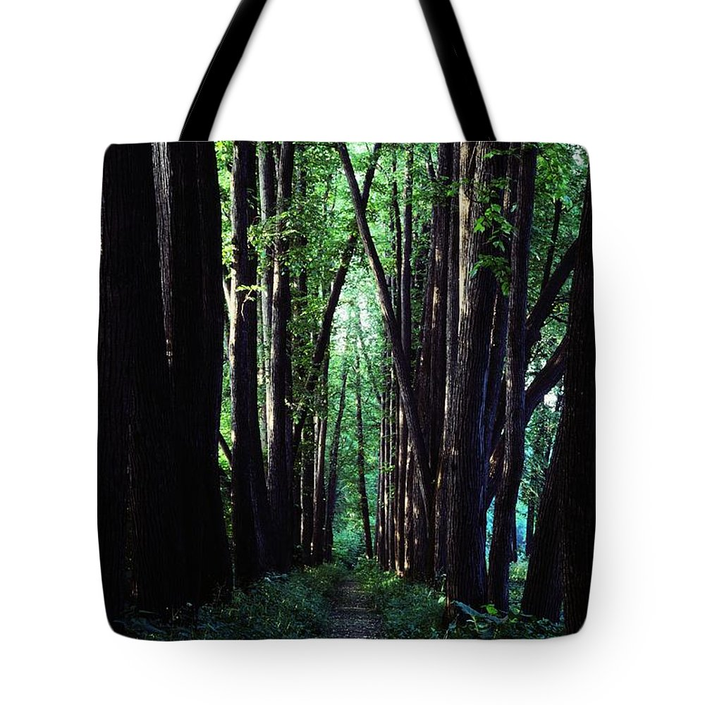 Outdoors Tote Bag featuring the photograph Linden Trees Line Leo Tolstoys Favorite by Sam Abell