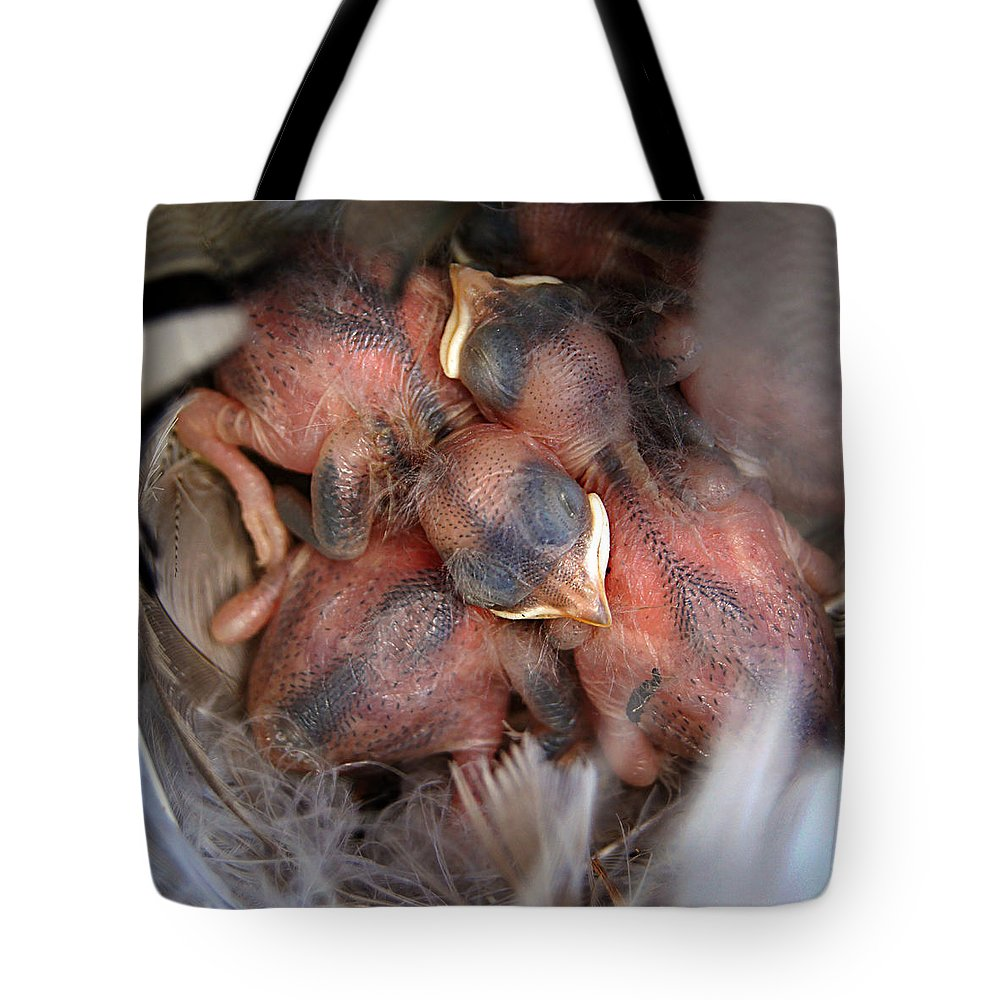 Bird Tote Bag featuring the photograph Little Bird Dreams by Bill Pevlor