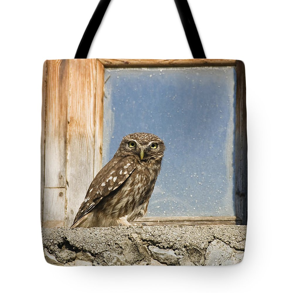 Mp Tote Bag featuring the photograph Little Owl Athene Noctua On Window by Konrad Wothe
