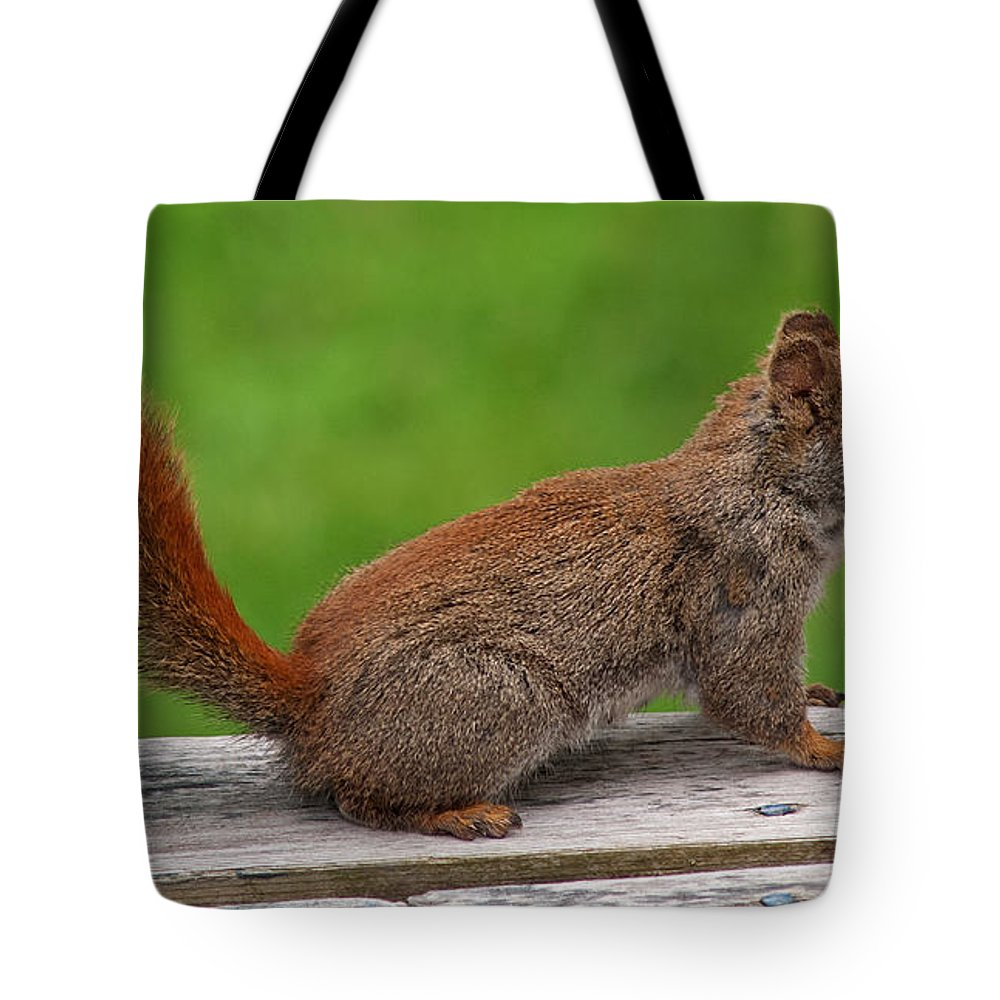 Squirrel Tote Bag featuring the photograph Little Red by Jeff Galbraith