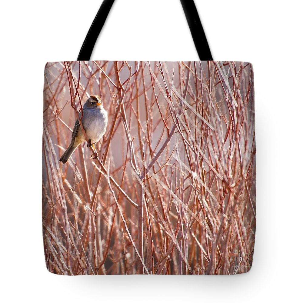 Bird Tote Bag featuring the photograph Little Sparrow by Sabrina L Ryan