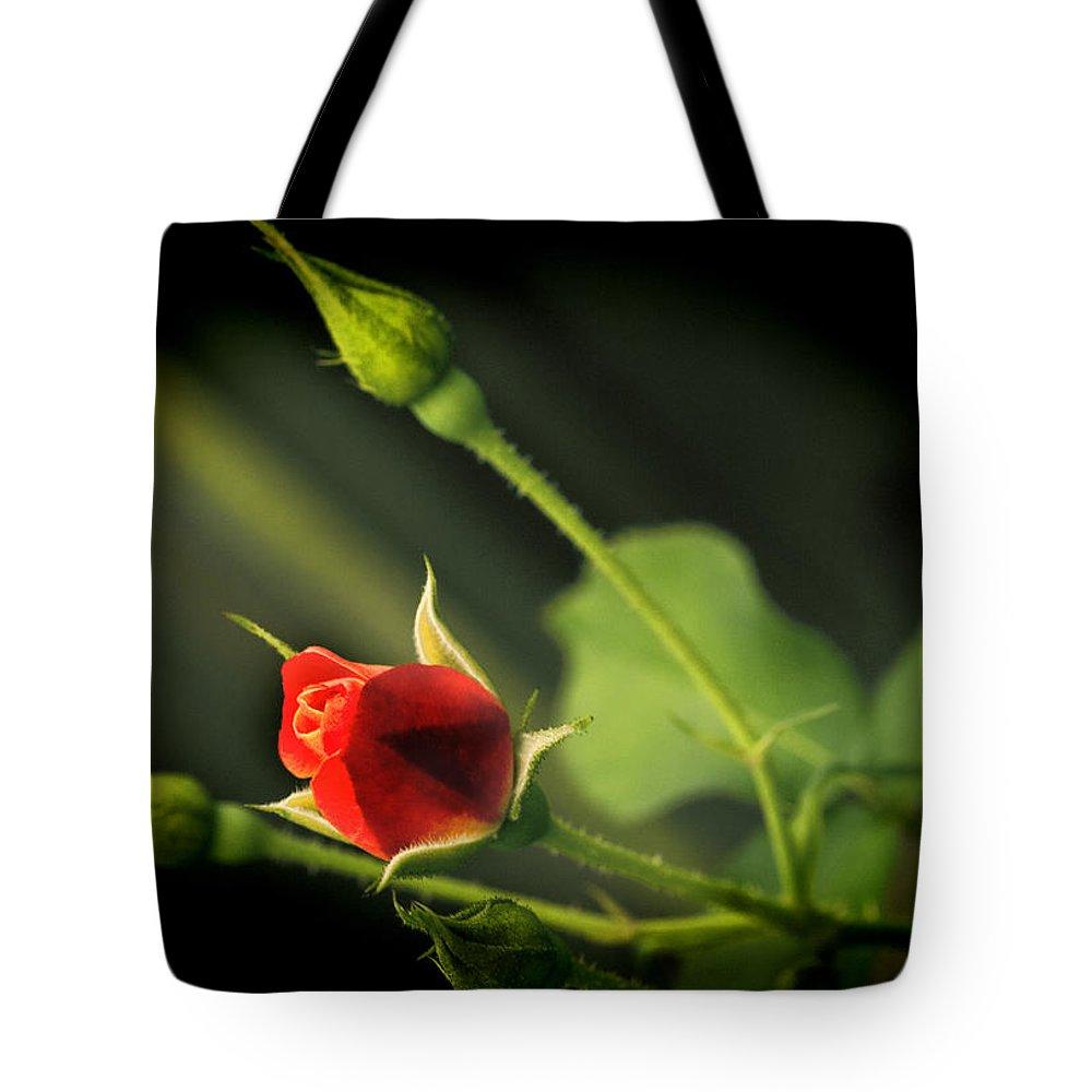 Flower Tote Bag featuring the photograph Lomorose by Sheri Bartoszek