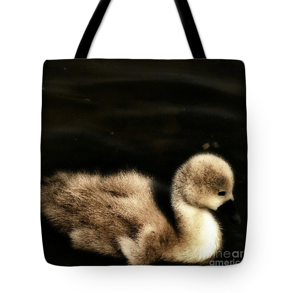 Cygnet Tote Bag featuring the photograph Lone Cygnet by Isabella F Abbie Shores FRSA