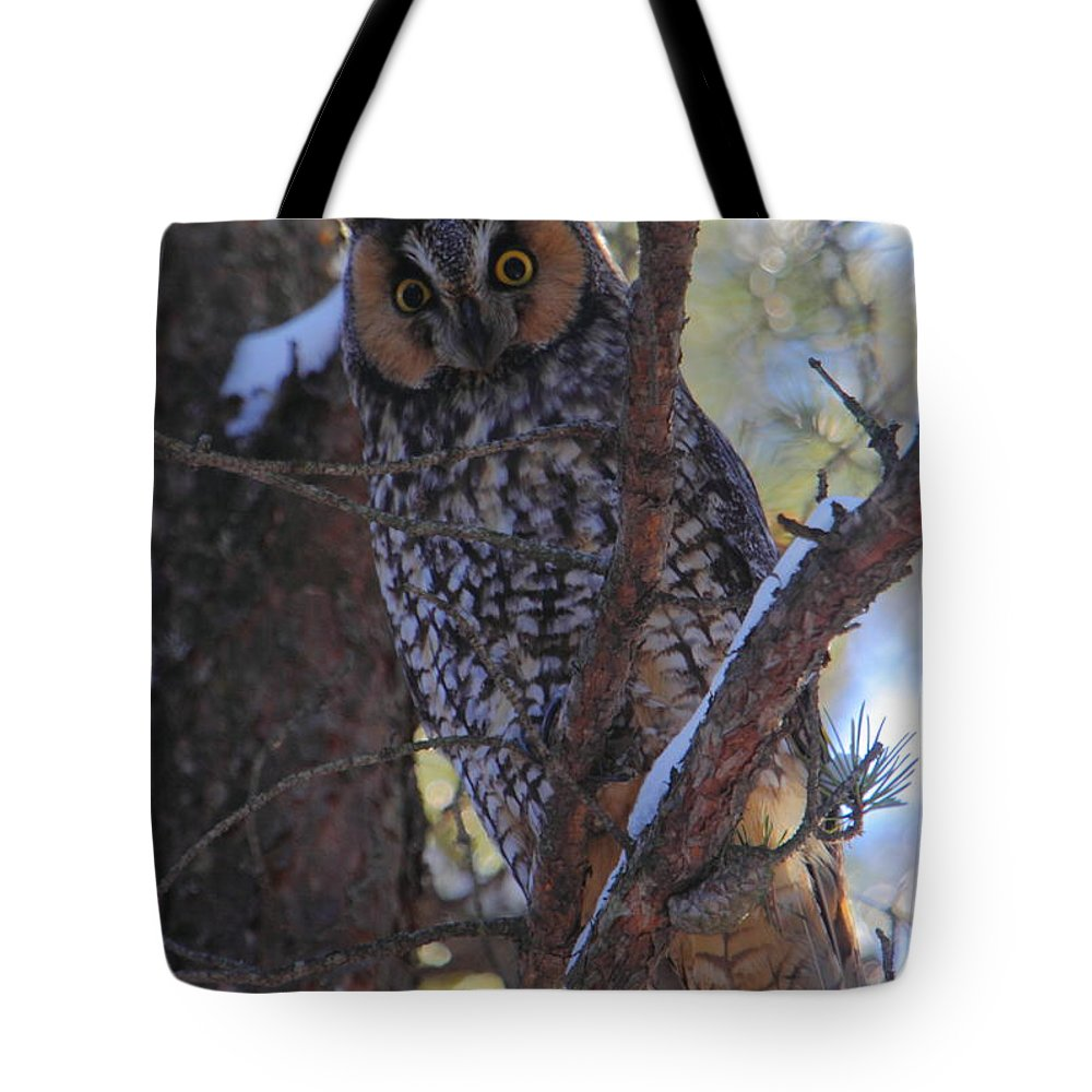 Owl Tote Bag featuring the photograph Long-eared Owl by Bruce J Robinson