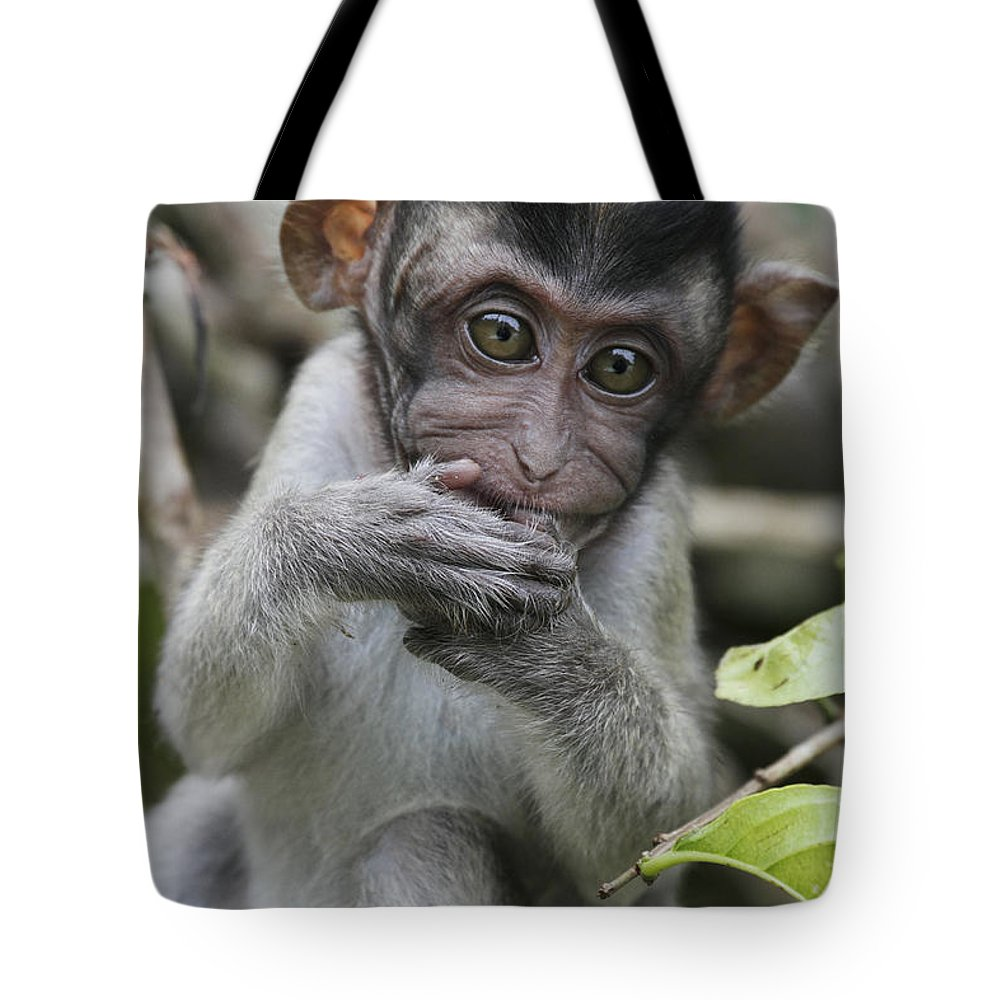 Mp Tote Bag featuring the photograph Long-tailed Macaque Macaca Fascicularis by Hiroya Minakuchi